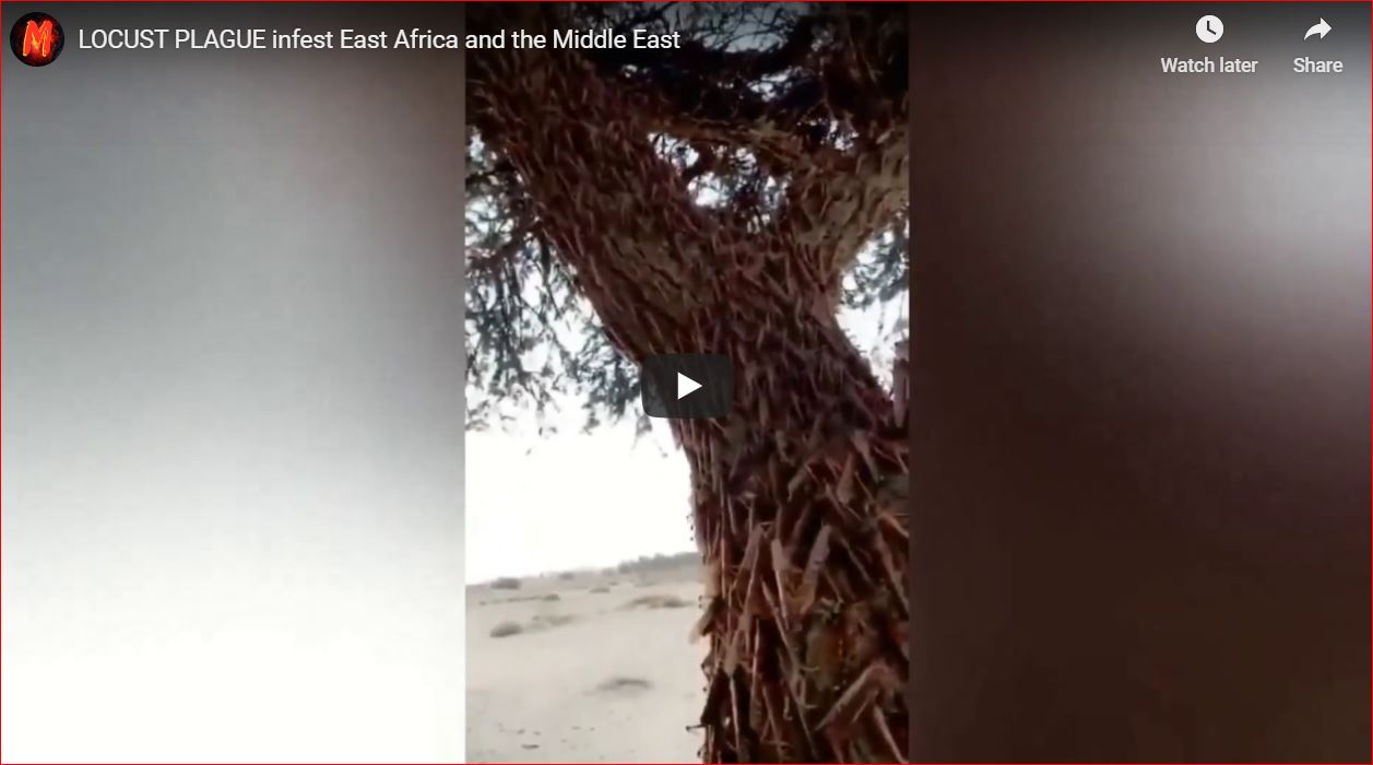 LOCUST PLAGUE infest East Africa and the Middle East ...
